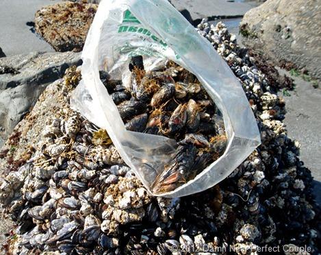 Bag O' Mussels