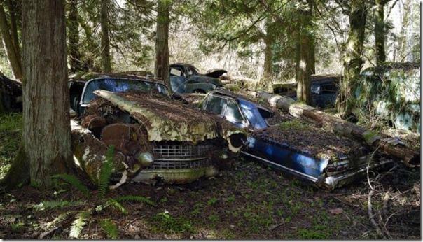 Cemitério de carros na floresta (10)