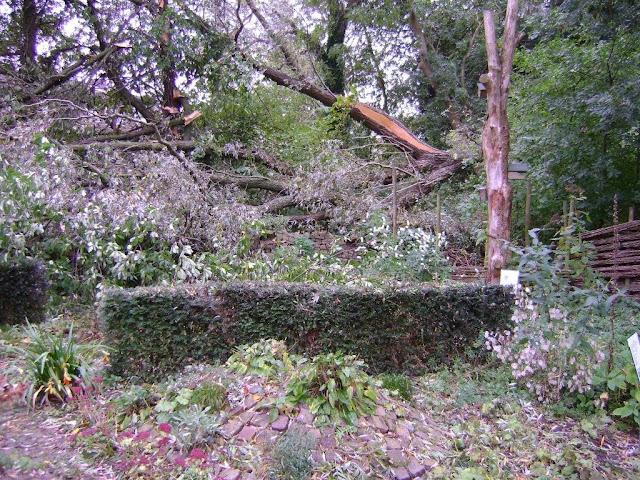 stormschade rekerdijktuin 013.jpg