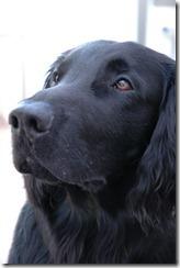 dog apr23 017