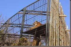16_12_2014-11_11_39-6118Edinburgh Zoo