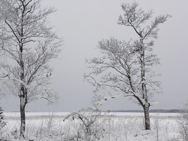 Ådön julen 2012