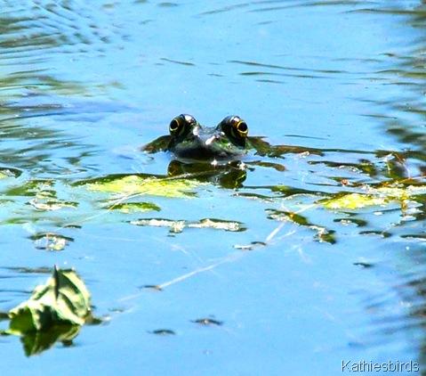 12. frog-DSC_0035
