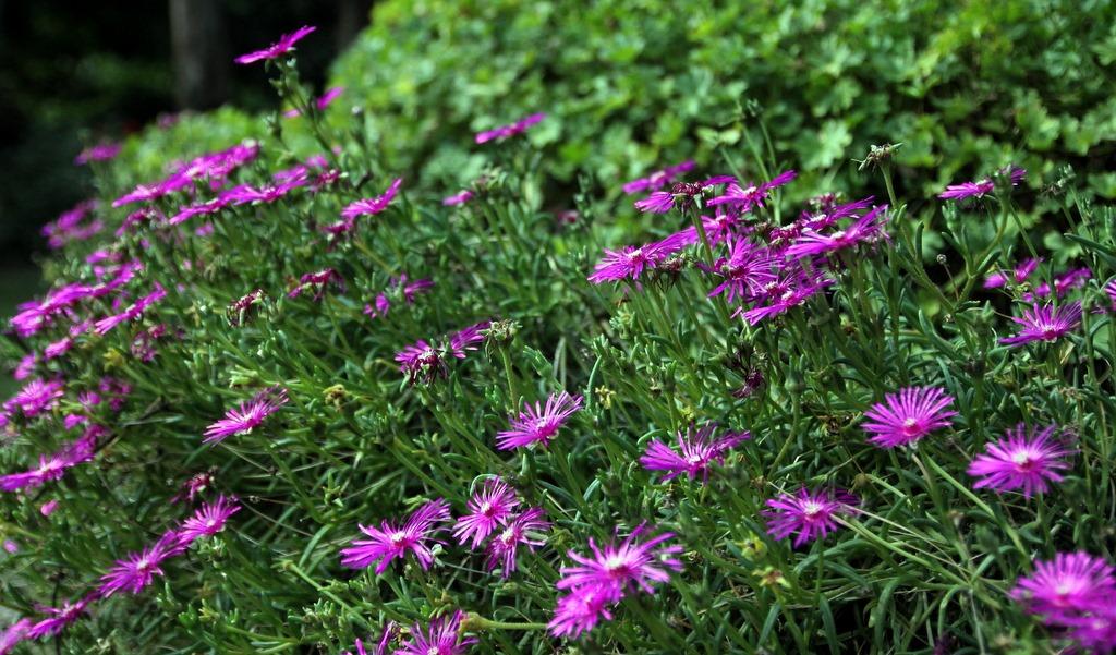 L 39 t 4 jardin de nadya for Le jardin des 4 saisons albi