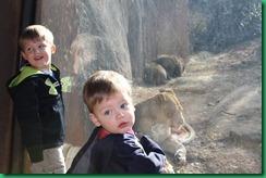 boys lion