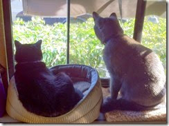 Missy, KC keeping watch