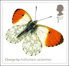 orange-tip_660