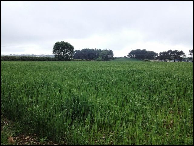 Sclerder Fields, Looe