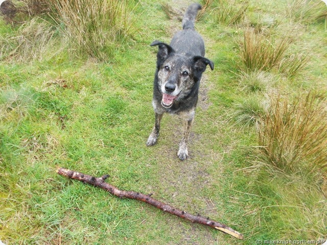 doomed stick