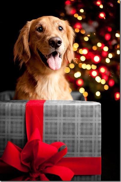 perro gorritos navidad (35)