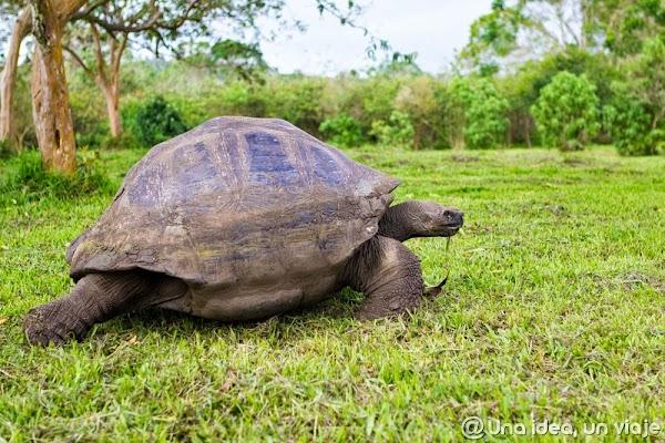 viajar-islas-galapagos-actividades-gratuitas-gratis-baratas-santa-cruz-unaideaunviaje-2.jpg