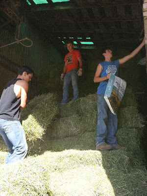 Washington FFA members baling hay.  Photo courtesy:  Washington FFA