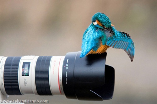 fotos de animais na hora certa desbaratinando  (3)