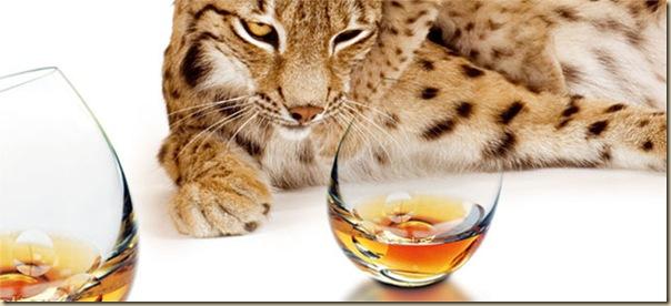 verres de table créatifs et originaux