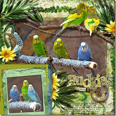 CMZ_Budgies_3-20-12