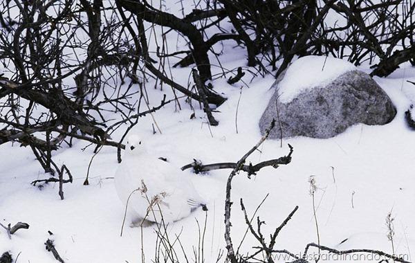 camuflagem-invisivel-animal-camouflage-photography-art-wolfe-desbaratinando (10)