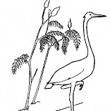 crane-10-coloring-page.jpg