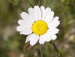 In_bloom_5