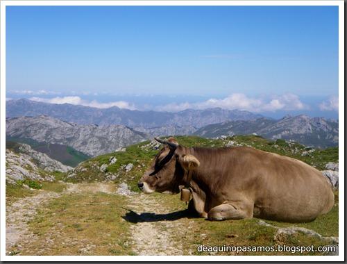 Jito Escarandi - Jierru 2424m - Lechugales 2444m - Grajal de Arriba y de Abajo (Picos de Europa) 0113