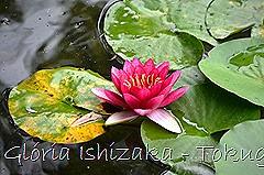 9 -Glória Ishizaka - Tokugawaen - Nagoya - Jp