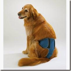 incontinenza urinaria nel cane e nella cagna 2