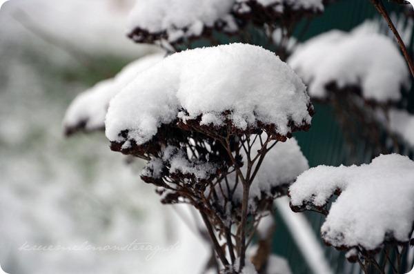 Schneesonntag 20zwölf (7)