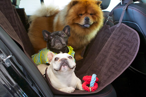 Here we are all ready to take a road trip to Lily Pond, our home in East Hampton.  The three of us are sitting comfortably in the back seat in the Car Seat Hammock.