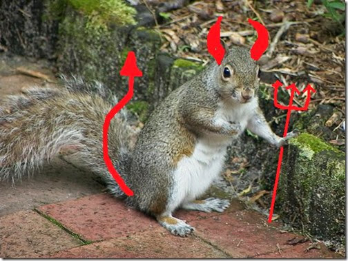 devilSquirrel