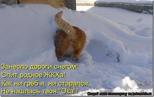 kotomatritsa__l