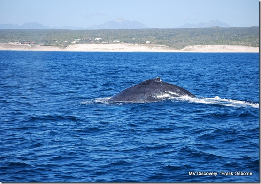 Big Whale