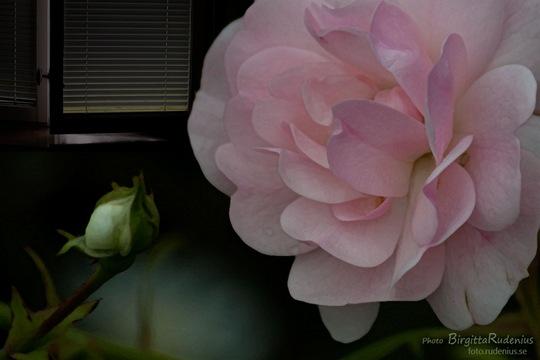 pm_20110704_rosewindow