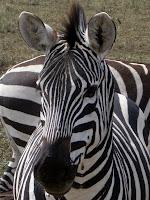 Northern Circuit Safari - Ngorongoro Crater