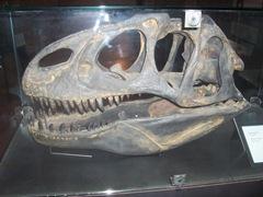 2008.09.05-006 crane d'Allosaurus