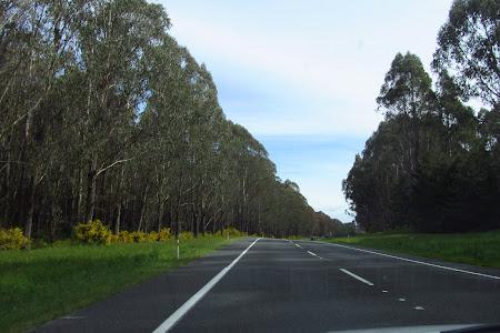Imagini Noua Zeelanda: La drum catre Rotorua