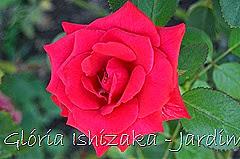 8   - Glória Ishizaka - Rosas do Jardim Botânico Nagai - Osaka
