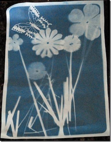 Sun Prints 1