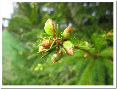 20120509_spring-property_017