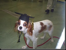 dog-training-school-grad