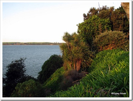 Tauranga harbour from the walkway around the bays. Abundant native bush.