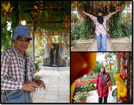 Cameron Highlands11