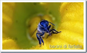 chiuda-sull-ape-del-miele-apis-mellifera-34805804