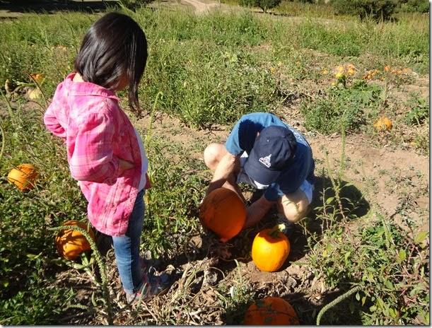 Pumpkin Patch 018