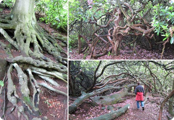 hawkstone-follies-roots-web