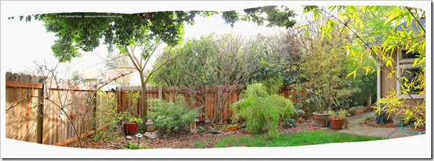 140305_before_tree_trimming_pano