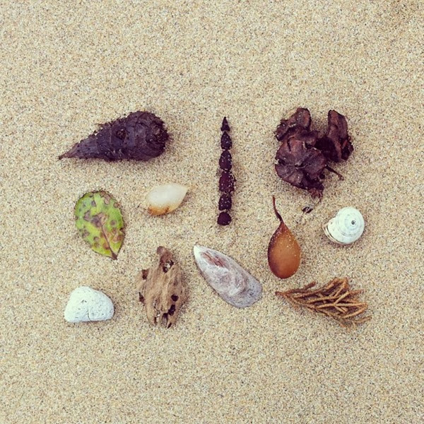 Tida detritus on Apollo Bay by Alchemy