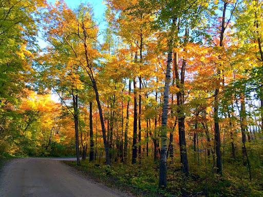 Maplelag driveway