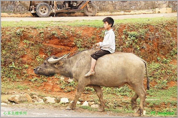 水牛与牧童