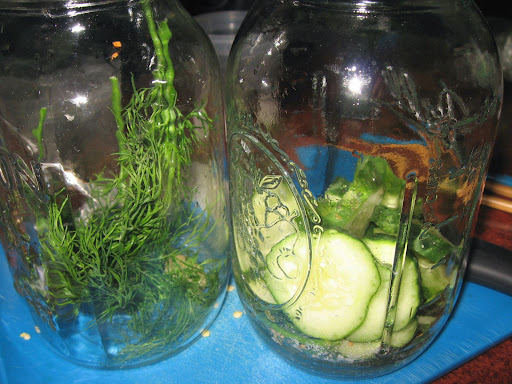 I began to fill my jars with dill, garlic, salt and a few cucumbers.