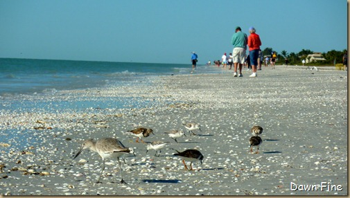 Sanibel Shell and birds_079