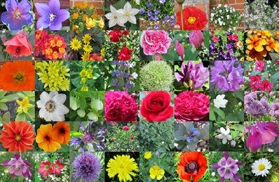 Blühender Garten Anfang Juni